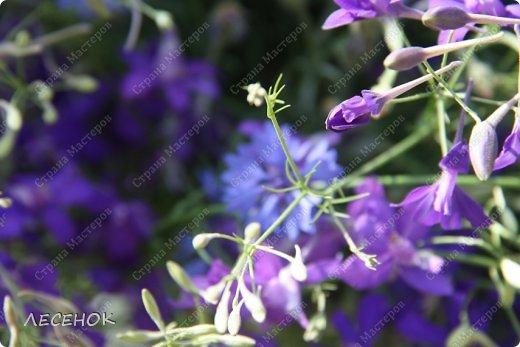 Добрый день всем!!!! Хочу с Вами поделиться прекрасными мгновениями счастья. Прогулками по полям и земляничным полянам.  Полевые цветы... Полевые... Васильки и ромашки в лугах... Ярко-синие и голубые – На бескрайних Российских полях.  Сколько нежности, яркости, света Вы храните в себе летним днем... Теплым солнцем весной вы согреты, И умыты осенним дождем...  Разукрашены радуги краской, Снежной шубой, укрыты зимой. Мать – Земля напоила вас лаской, Наградила небесной красой.  Полевые цветы... Полевые... Не сравнить вас с садовым цветком. Вы согрели мне душу, родные! Поселились вы в сердце моем! фото 10