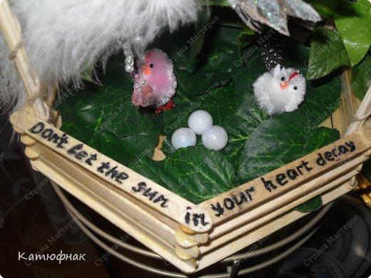 Домик Райской птички фото 3