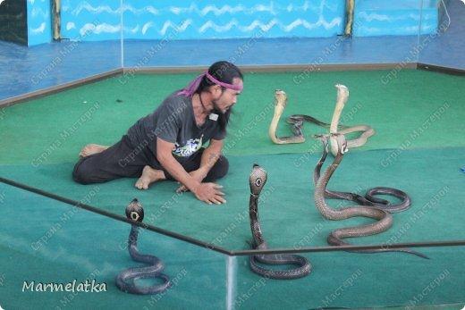 Змеиная ферма в Паттайе находится возле улицы Сукхумвит в сторону Джомтьена. 20 минут на тук-туке и мы были там. Интересно очень... весело... и немного страшно, когда на тебя с потолка падает змея( игрушка) фото 1