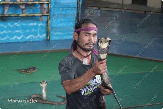 Змеиная ферма в Паттайе находится возле улицы Сукхумвит в сторону Джомтьена. 20 минут на тук-туке и мы были там. Интересно очень... весело... и немного страшно, когда на тебя с потолка падает змея( игрушка) фото 2