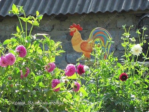 Всем доброго времени суток! Новый жилец нашего огорода Петя. фото 16