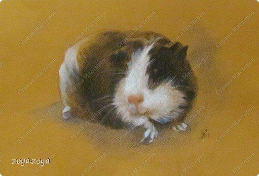 моя свинка фото 1