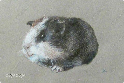 моя свинка фото 2