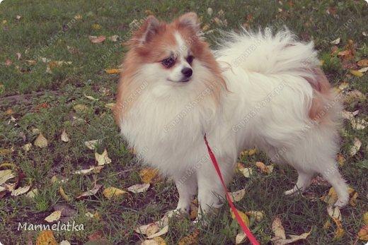 Осенний Чип фото 8
