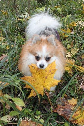 Осенний Чип