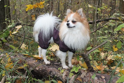 Осенний Чип фото 3