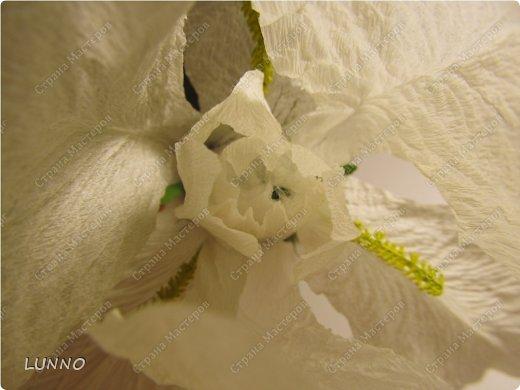 Мастер-класс Поделка изделие Моделирование конструирование «Ирис из креповой бумаги» Бумага гофрированная фото 7