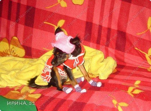 2,5 года назад в нашей семье появилось маленькое чудесное создание- девочка той-терьера (длинношерстного) Грация из Морошкового края. Дома мы ее зовем Дашенька. Вот такая крошка, в возрасте 1,5 мес.  приехала в наш дом и подарила много СЧАСТЬЯ!!! (Мы участвуем в конкурсе https://stranamasterov.ru/node/668562?c=favorite_c ) Голосование проходит тут: https://stranamasterov.ru/node/672148 фото 9