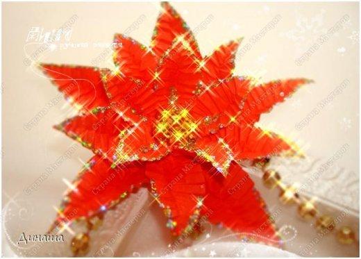 Добрый вечер, дорогие жители Страны мастеров и ее гости. Сегодня мое повествование посвящено пуансеттии или рождественской звезде (или малочаю прекраснейшему, как по-научному). Очаровательная рождественская звезда пуансеттия имеет длинную историю. Ацтеки - первые ценители пуансеттии, использовали ее красные прицветники в качестве естественного красителя для косметики и тканей, а белый сок рождественской звезды - для лечения лихорадки. Жители США узнали молочай прекраснейший благодаря стараниям Дж. Р. Пойнсетта (1779 - 1851) - врача и ботаника, которого президент Мэдисон назначил первым американским послом в Мексике. Настоящей страстью Пойнсетта была, однако, вовсе не политика, а ботаника. Впервые увидев молочай прекраснейший в цвету в Мексике в 1828 году, Пойнсетт тут же послал несколько образцов в свои оранжереи в Гринвиле (Южная Каролина), где позже стал размножать пуансеттию и рассылать образцы в ботанические сады. В 1830-х годах рождественская звезда попала в коммерческое производство и вскоре обрела известность под именем своего первооткрывателя - poinsettia (в русский язык название вошло как пуансеттия). Из Америки традиция покупать пуансеттию для украшения дома на Рождество попала в Европу. У нас эта традиция еще не на столько распространена, но это не уменьшает прелести цветка. фото 1