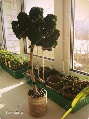 Вечнозеленый топиарий. фото 1
