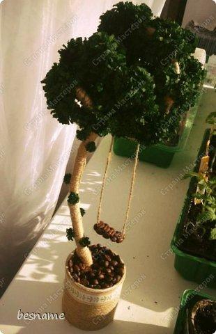 Вечнозеленый топиарий. фото 2