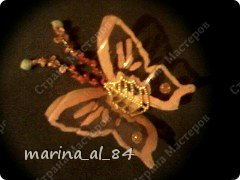 бабочки фото 4