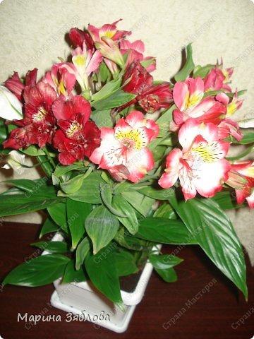 Мастер-класс Флористика 8 марта День матери День рождения День семьи Живая ваза  Банки стеклянные Материал природный фото 1