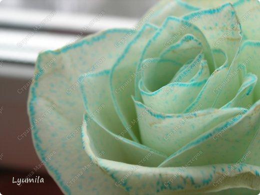 После 8 марта осталось много цветов в разной степени увядания. Разбирали букеты и на остатках цветов ставили с Лидочкой опыты. Я вспомнила, что живые цветы можно красить и мы посвятили последние 2 недели этому. На этом фото подкрашенные розы.  фото 4