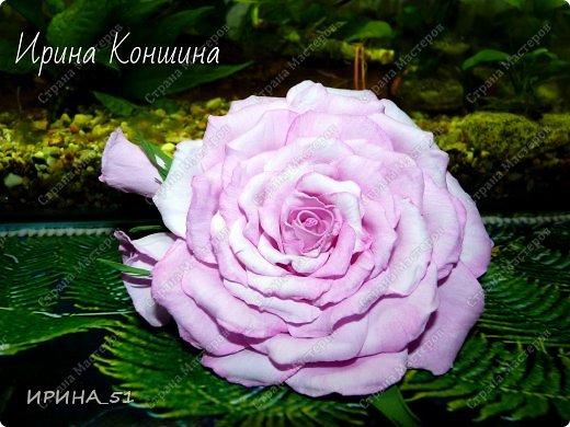 Здравствуйте мои дорогие соседи и друзья!  Сегодня замечательный день, 1 сентября. Пользуясь случаем поздравляю детей, родителей и педагогов  с этим замечательным днем!  Наступила осень,  а у меня созрели очередные розы.  Не буду много писать, приглашаю к просмотру. фото 3