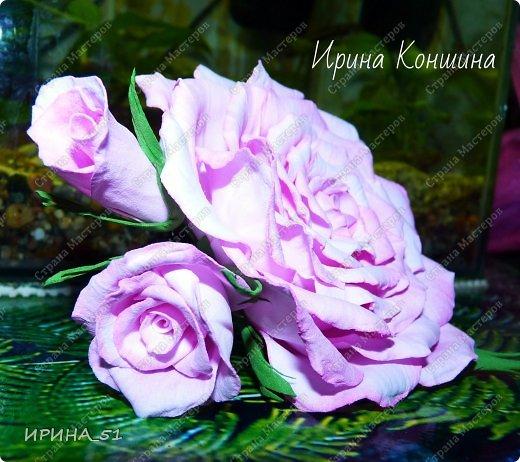 Здравствуйте мои дорогие соседи и друзья!  Сегодня замечательный день, 1 сентября. Пользуясь случаем поздравляю детей, родителей и педагогов  с этим замечательным днем!  Наступила осень,  а у меня созрели очередные розы.  Не буду много писать, приглашаю к просмотру. фото 2