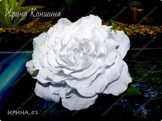Здравствуйте мои дорогие соседи и друзья!  Сегодня замечательный день, 1 сентября. Пользуясь случаем поздравляю детей, родителей и педагогов  с этим замечательным днем!  Наступила осень,  а у меня созрели очередные розы.  Не буду много писать, приглашаю к просмотру. фото 7