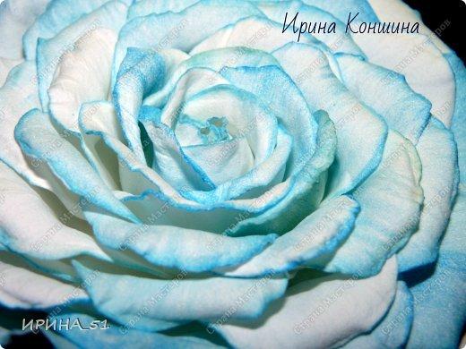 Здравствуйте мои дорогие соседи и друзья!  Сегодня замечательный день, 1 сентября. Пользуясь случаем поздравляю детей, родителей и педагогов  с этим замечательным днем!  Наступила осень,  а у меня созрели очередные розы.  Не буду много писать, приглашаю к просмотру. фото 11