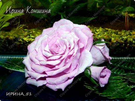 Здравствуйте мои дорогие соседи и друзья!  Сегодня замечательный день, 1 сентября. Пользуясь случаем поздравляю детей, родителей и педагогов  с этим замечательным днем!  Наступила осень,  а у меня созрели очередные розы.  Не буду много писать, приглашаю к просмотру. фото 4