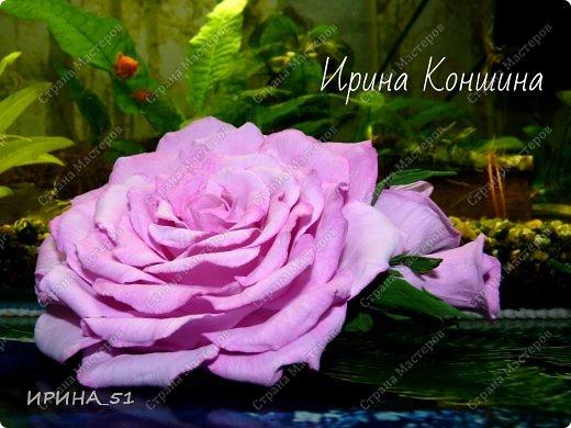 Здравствуйте мои дорогие соседи и друзья!  Сегодня замечательный день, 1 сентября. Пользуясь случаем поздравляю детей, родителей и педагогов  с этим замечательным днем!  Наступила осень,  а у меня созрели очередные розы.  Не буду много писать, приглашаю к просмотру. фото 1