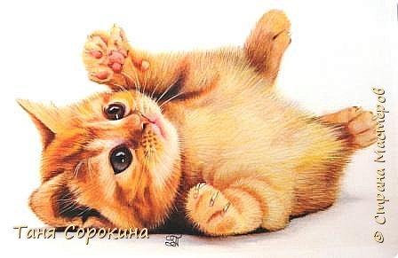 """Продолжаю тренироваться на кошках))). Нашла в инете этого чудного котёнка и решила его нарисовать, тем более, что если долго не рисуешь, то навыки ухудшаются. У меня тоже живёт рыжая бестия Семен, я его уже рисовала котёнком, но он обычный """"дворянин"""",а этот явно породистый! фото 1"""