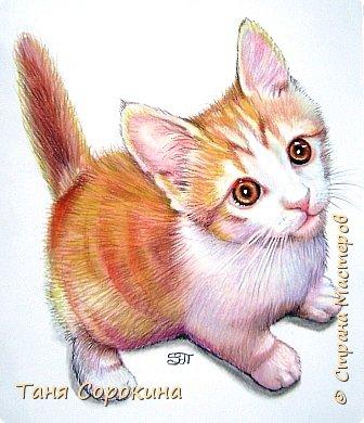 """Продолжаю тренироваться на кошках))). Нашла в инете этого чудного котёнка и решила его нарисовать, тем более, что если долго не рисуешь, то навыки ухудшаются. У меня тоже живёт рыжая бестия Семен, я его уже рисовала котёнком, но он обычный """"дворянин"""",а этот явно породистый! фото 3"""