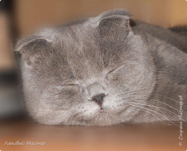 Доброго времени суток уважаемые мастера!  Кто-то уже слышал, вернее читал про кота, который был у супруги ещё до нашего знакомства, а потом у нас до рождения нашего сына.   Звали кота Лео, помесь британца и шотландца, может поэтому он был очень мягкий и добродушный, как валенок.   фото 1