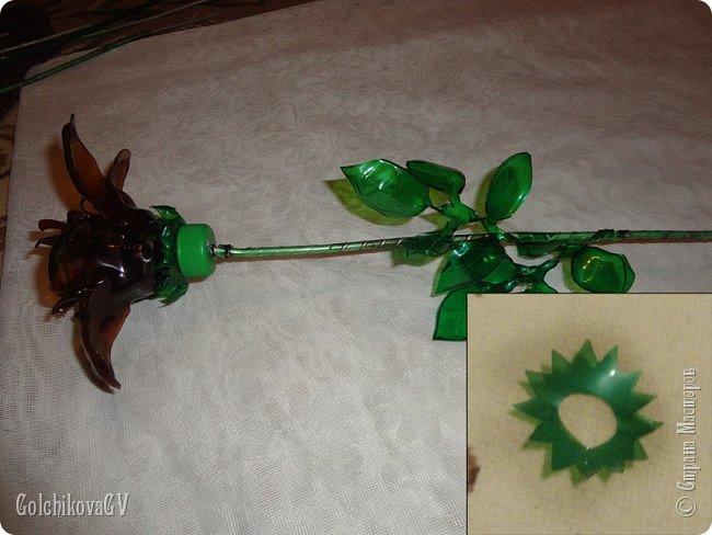 Добрый вечер, дорогие соседи!!!  Решила я выставить свои цветы из пластиковых бутылок и баночек.  Никак не могла закончить, т.к не хватало зеленых бутылок, но помогли друзья. Результат решила вам показать. фото 16
