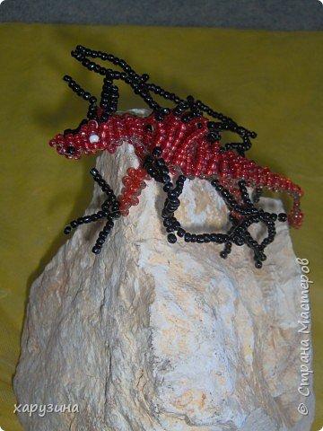 И вновь драконы... фото 3