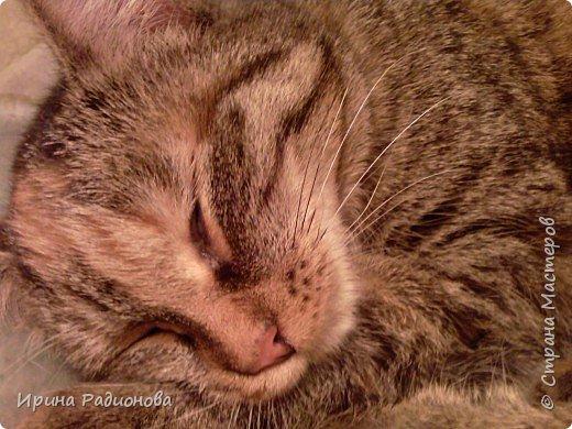 спокойной ночи.......кошки! фото 3