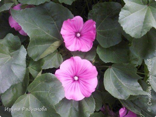 красота спасет мир.  фото 4