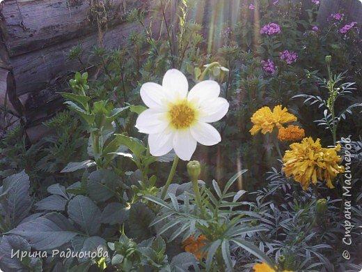 красота спасет мир.  фото 7