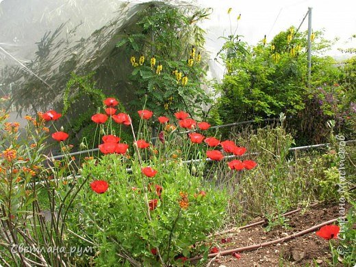 Полюбуйтесь кактусами. Многие из них сейчас цветут. фото 39