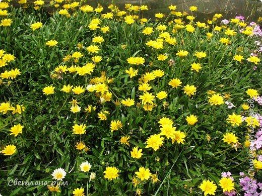 Полюбуйтесь кактусами. Многие из них сейчас цветут. фото 40
