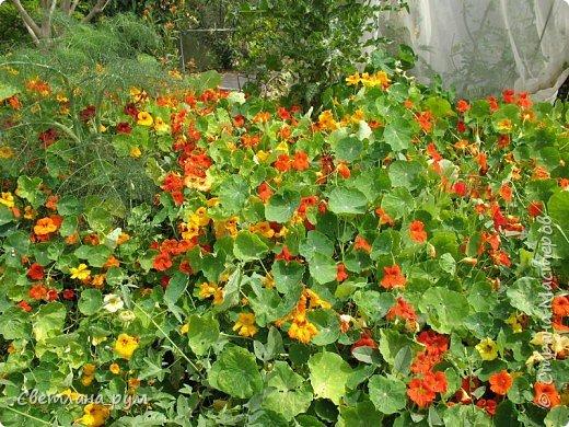 Полюбуйтесь кактусами. Многие из них сейчас цветут. фото 41