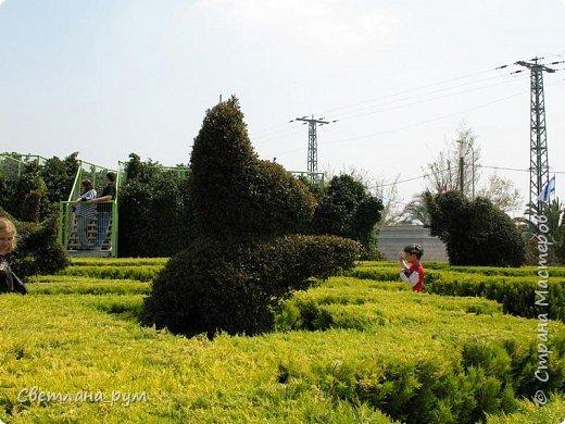 Полюбуйтесь кактусами. Многие из них сейчас цветут. фото 14