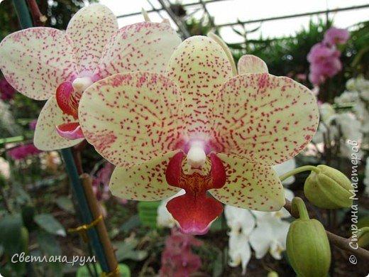 Утопия парк орхидей в израиле фото 22