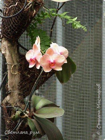 Утопия парк орхидей в израиле фото 23