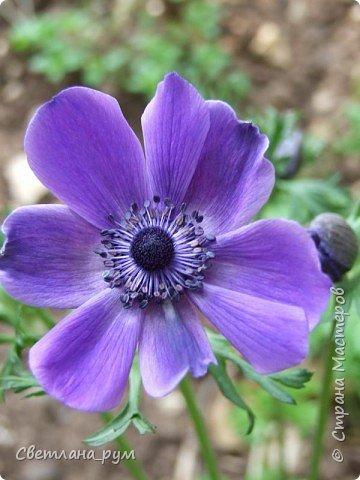 Полюбуйтесь кактусами. Многие из них сейчас цветут. фото 45