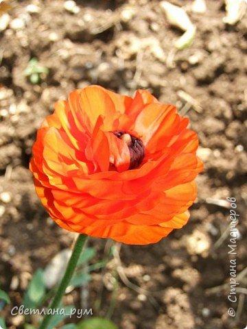 Полюбуйтесь кактусами. Многие из них сейчас цветут. фото 47