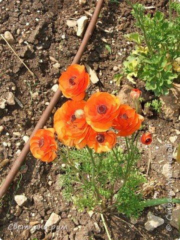 Полюбуйтесь кактусами. Многие из них сейчас цветут. фото 46