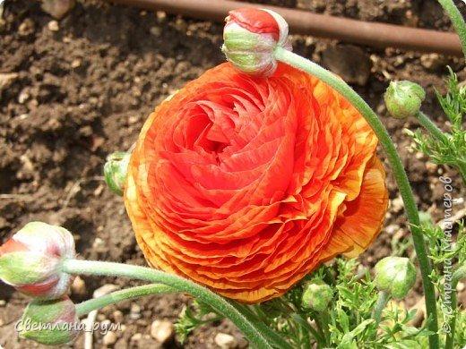 Полюбуйтесь кактусами. Многие из них сейчас цветут. фото 48