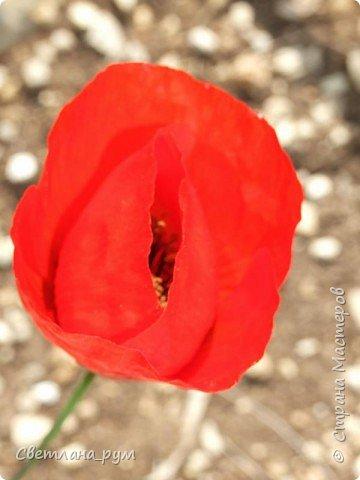 Полюбуйтесь кактусами. Многие из них сейчас цветут. фото 49