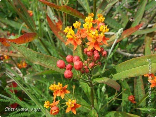 Полюбуйтесь кактусами. Многие из них сейчас цветут. фото 51