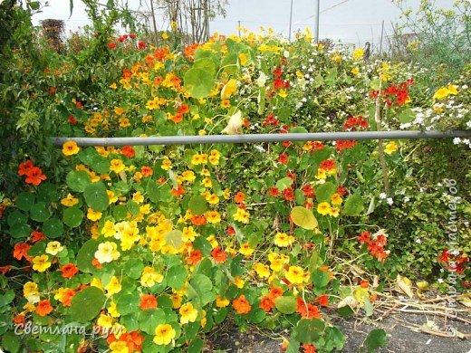 Полюбуйтесь кактусами. Многие из них сейчас цветут. фото 43