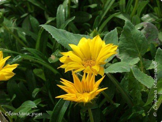 Полюбуйтесь кактусами. Многие из них сейчас цветут. фото 53