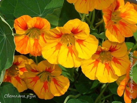 Полюбуйтесь кактусами. Многие из них сейчас цветут. фото 42