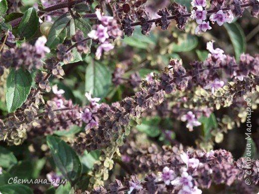 Полюбуйтесь кактусами. Многие из них сейчас цветут. фото 55