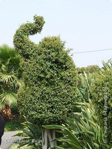 Полюбуйтесь кактусами. Многие из них сейчас цветут. фото 30