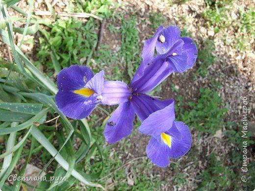 Полюбуйтесь кактусами. Многие из них сейчас цветут. фото 56